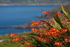 Wildflowers Zdjęcie Royalty Free