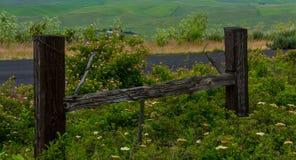 Wildflowers na kroka palec u nogi Butte obrazy royalty free