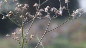 Wildflowers na manhã, wildflowers na manhã video estoque