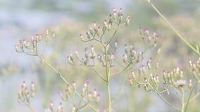 Wildflowers na manhã, wildflowers na manhã vídeos de arquivo