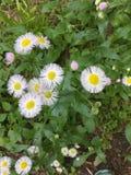 Wildflowers na mola imagem de stock royalty free