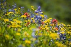 Wildflowers na Mt piekarz Obraz Royalty Free