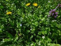 Wildflowers na zielonym dywanie trawa i li?cie fotografia stock