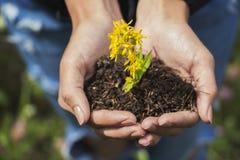 Wildflowers nas mãos Imagens de Stock Royalty Free