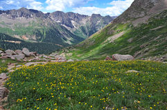 Wildflowers nas Montanhas Rochosas, Colorado Imagens de Stock