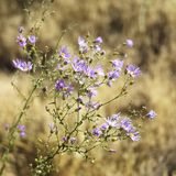 Wildflowers in National Park. Royalty Free Stock Images