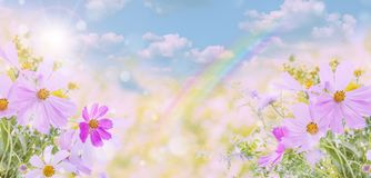 Wildflowers on a natural background Royalty Free Stock Photo