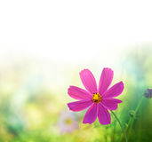 Wildflowers. Natural background with wildflowers for your project Stock Photos