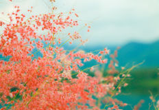 Wildflowers  on nature background. Stock Photo