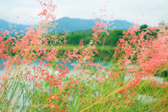 Wildflowers  on nature background. Royalty Free Stock Photo