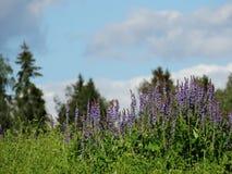 Wildflowers Stock Photography