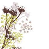 Wildflowers nei colori di autunno Fotografia Stock