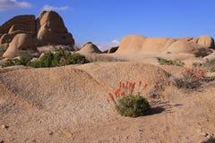 Wildflowers nel deserto Immagine Stock Libera da Diritti