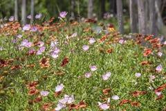 Wildflowers nella foresta - priorit? alta dei papaveri e di altri wildflowers in erba con gli alberi vaghi nel fondo - fuoco bass fotografia stock