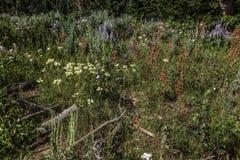 Wildflowers nella gamma del Wyoming Wind River fotografie stock