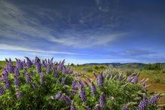 Wildflowers nella gola del fiume di Colombia Fotografie Stock Libere da Diritti
