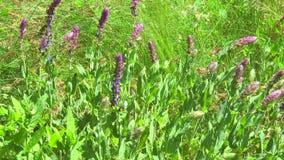 Wildflowers nella steppa video d archivio