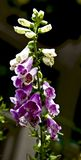 Wildflowers nello Smokies Immagine Stock