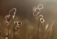 Wildflowers no fundo do sol de ajuste Imagens de Stock Royalty Free