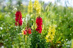 Wildflowers no prado fotografia de stock royalty free
