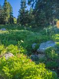 Wildflowers no prado da montanha fotos de stock royalty free