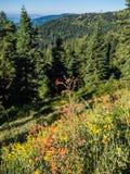 Wildflowers no prado da montanha fotos de stock