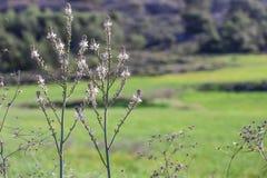 Wildflowers no tempo de mola Fotos de Stock