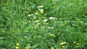 Wildflowers no verão video estoque