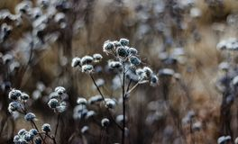 Wild flowers / Grass flowers in Illinois. Wildflowers in Northern Illinois prairie after the fall season royalty free stock image