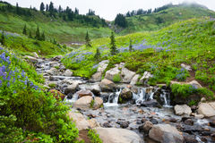 Wildflowers o Monte Rainier da cachoeira imagem de stock