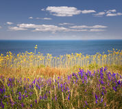 Wildflowers and ocean Royalty Free Stock Image