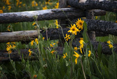 Wildflowers off Last Dollar Road outside Ridgeway, Colorado Stock Image