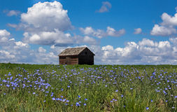 Wildflowers and an Old Building Royalty Free Stock Photos