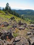 Wildflowers onder rotsen in bergen Royalty-vrije Stock Foto's