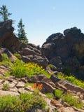 Wildflowers onder rotsen in bergen Stock Fotografie