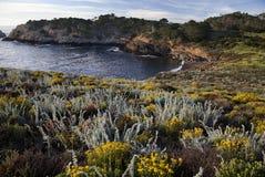 Wildflowers op de Kustlijn van Lobos van het Punt   Royalty-vrije Stock Afbeeldingen