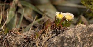 Wildflowers op de steen Royalty-vrije Stock Fotografie