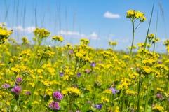 Wildflowers op een achtergrond van blauwe hemel met wolken royalty-vrije stock foto