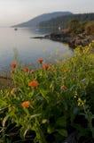 Wildflowers op een Eiland royalty-vrije stock foto