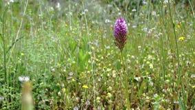Wildflowers op een helder gebied stock video