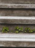 Wildflowers op houten stappen rustieke stijl, één plaats voor tekst royalty-vrije stock afbeeldingen