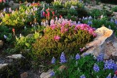 Wildflowers op paradijsgebied op MT. regenachtiger stock foto's
