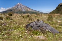 Wildflowers op weide bij onderstel Taranaki Stock Foto