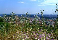 Wildflowers over cityscape Stock Image