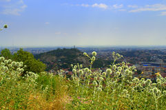Wildflowers Plovdiv cityscape Royalty Free Stock Photo