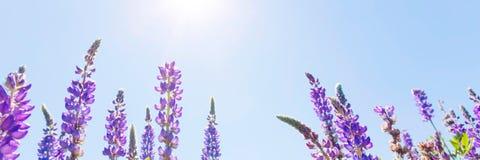 Wildflowers. Over sunny blue sky Stock Photos