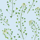 Wildflowers pattern Royalty Free Stock Image