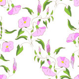 Wildflowers pattern Stock Photo