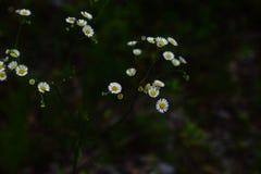 Wildflowers pela trilha do trem Imagens de Stock