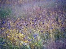 Wildflowers Pha Tam01 obraz stock